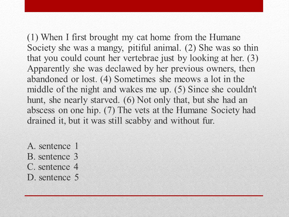 (1) When I first brought my cat home from the Humane Society she was a mangy, pitiful animal.