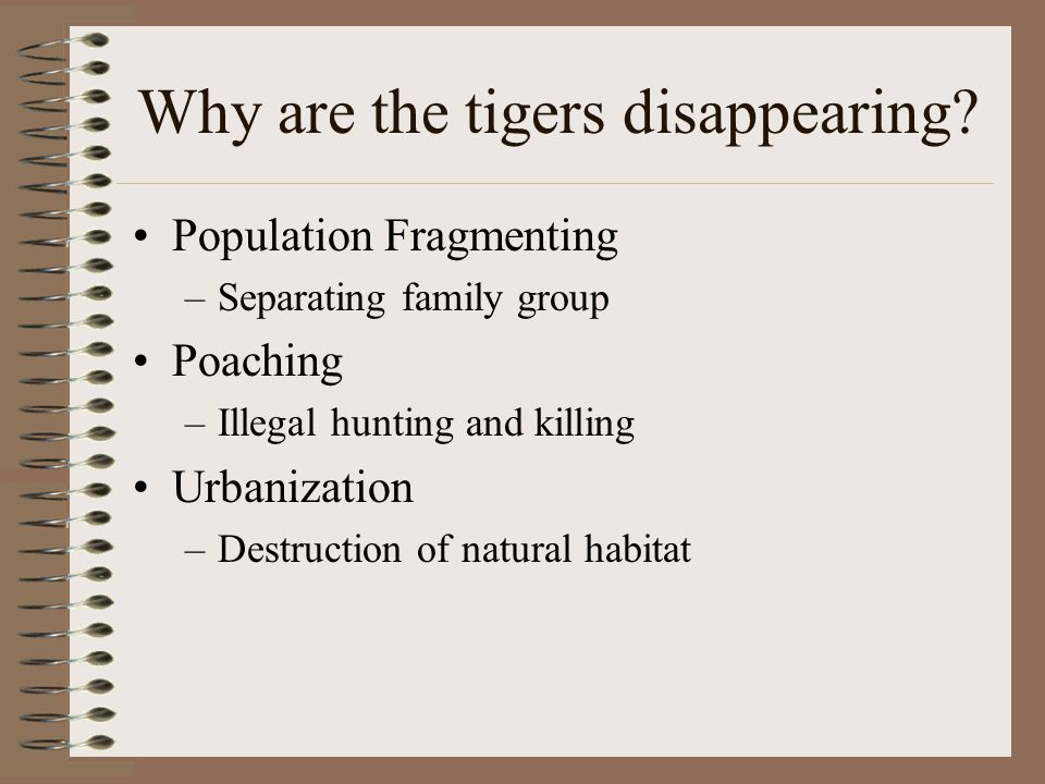 Why are the tigers disappearing