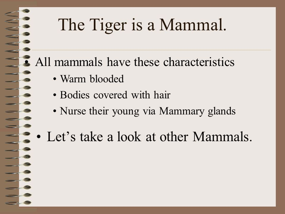 The Tiger is a Mammal. Let's take a look at other Mammals.