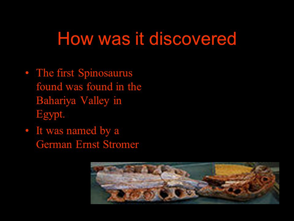 How was it discovered The first Spinosaurus found was found in the Bahariya Valley in Egypt.