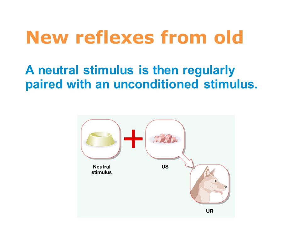7 New reflexes from old A neutral stimulus is then regularly paired with an unconditioned stimulus.