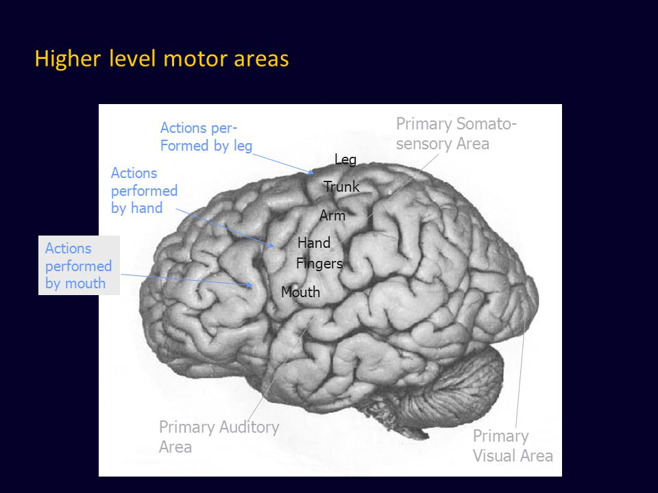 Higher level motor areas