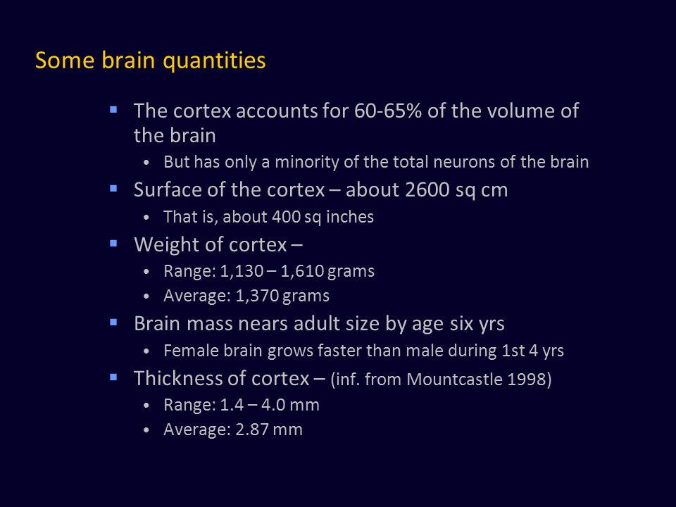 Some brain quantities The cortex accounts for 60-65% of the volume of the brain. But has only a minority of the total neurons of the brain.