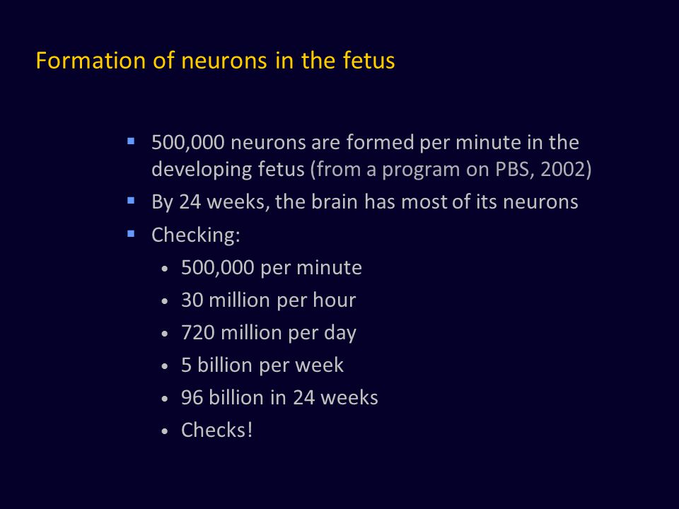 Formation of neurons in the fetus