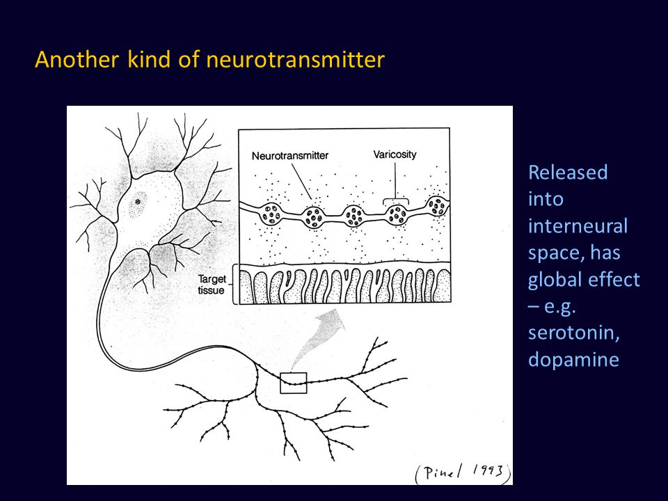 Another kind of neurotransmitter