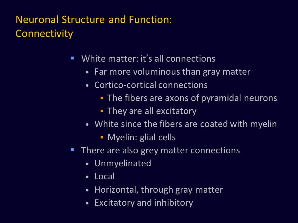 Neuronal Structure and Function: Connectivity