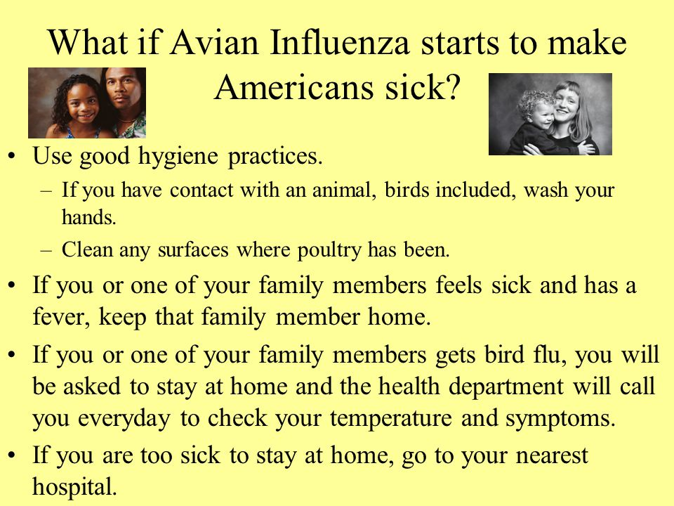 What if Avian Influenza starts to make Americans sick