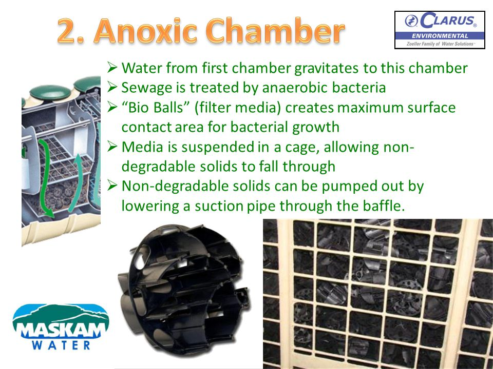 2. Anoxic Chamber Water from first chamber gravitates to this chamber