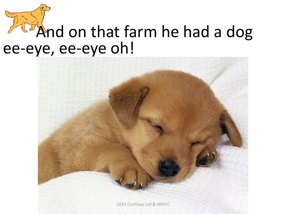 And on that farm he had a dog