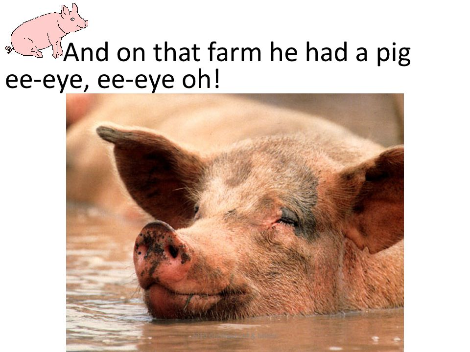 And on that farm he had a pig