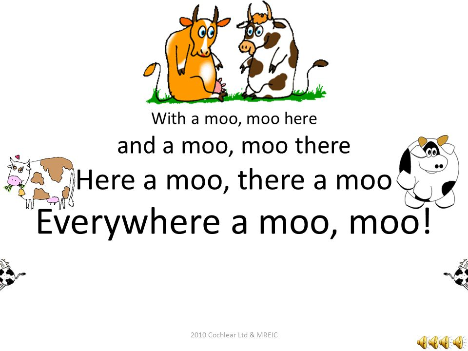 With a moo, moo here and a moo, moo there Here a moo, there a moo Everywhere a moo, moo!