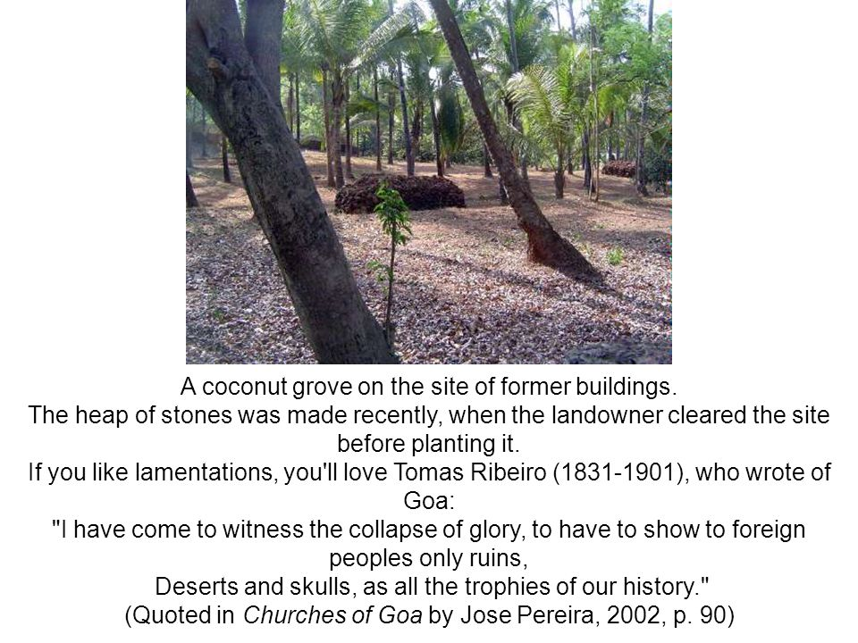A coconut grove on the site of former buildings.
