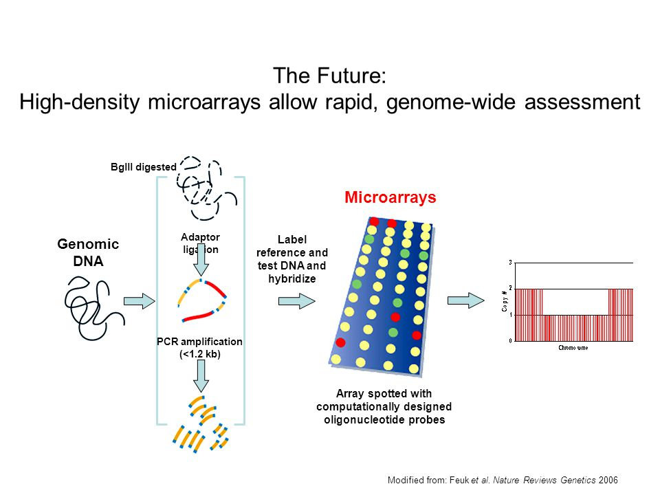 The Future: High-density microarrays allow rapid, genome-wide assessment
