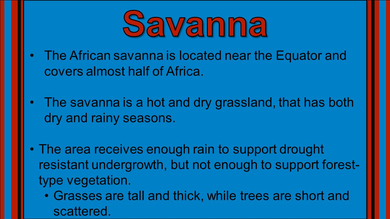 Savanna The African savanna is located near the Equator and covers almost half of Africa.
