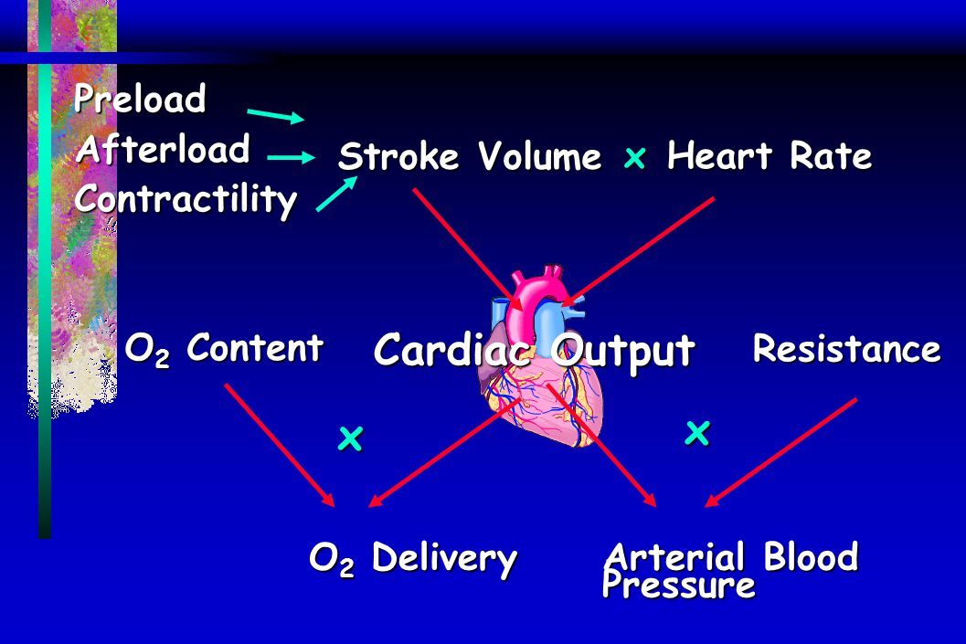 Cardiac Output x x Preload Afterload Contractility x Stroke Volume