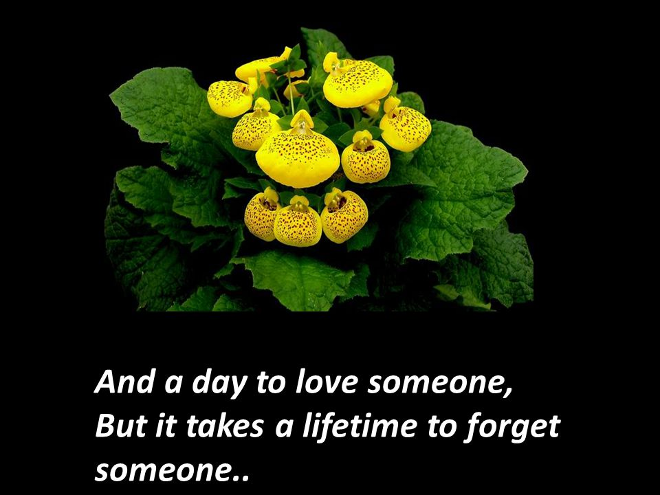 And a day to love someone, But it takes a lifetime to forget someone..
