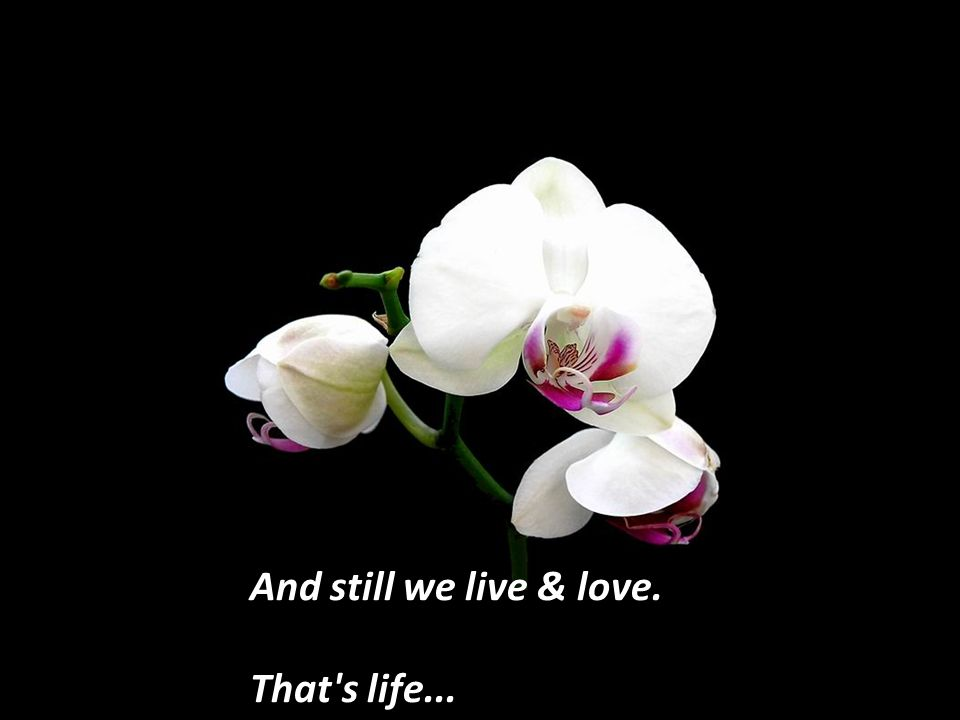 And still we live & love. That s life...