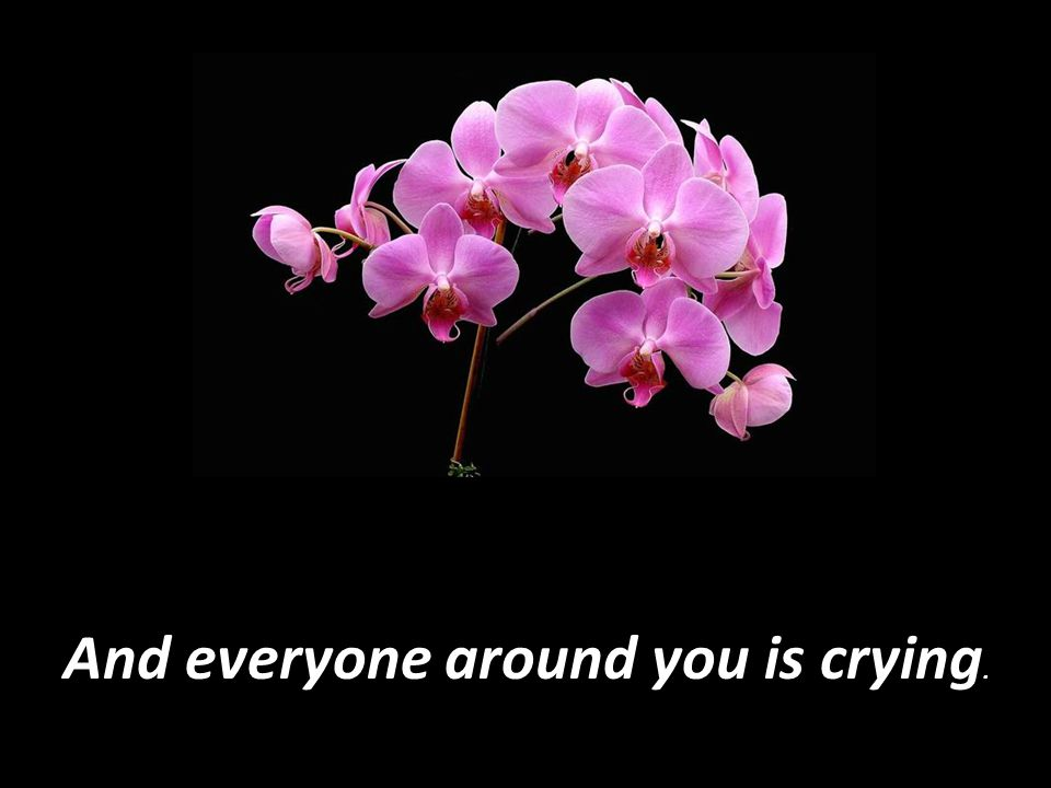 And everyone around you is crying.
