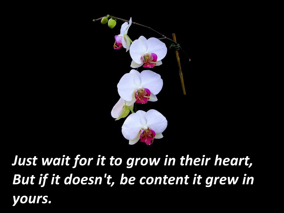 Just wait for it to grow in their heart,