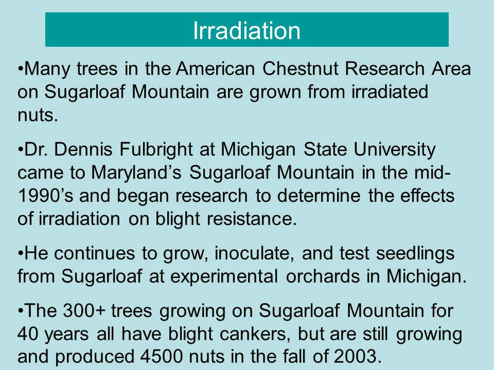 Irradiation Many trees in the American Chestnut Research Area on Sugarloaf Mountain are grown from irradiated nuts.