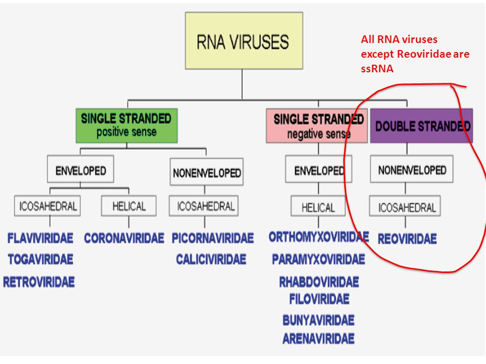 All RNA viruses except Reoviridae are ssRNA