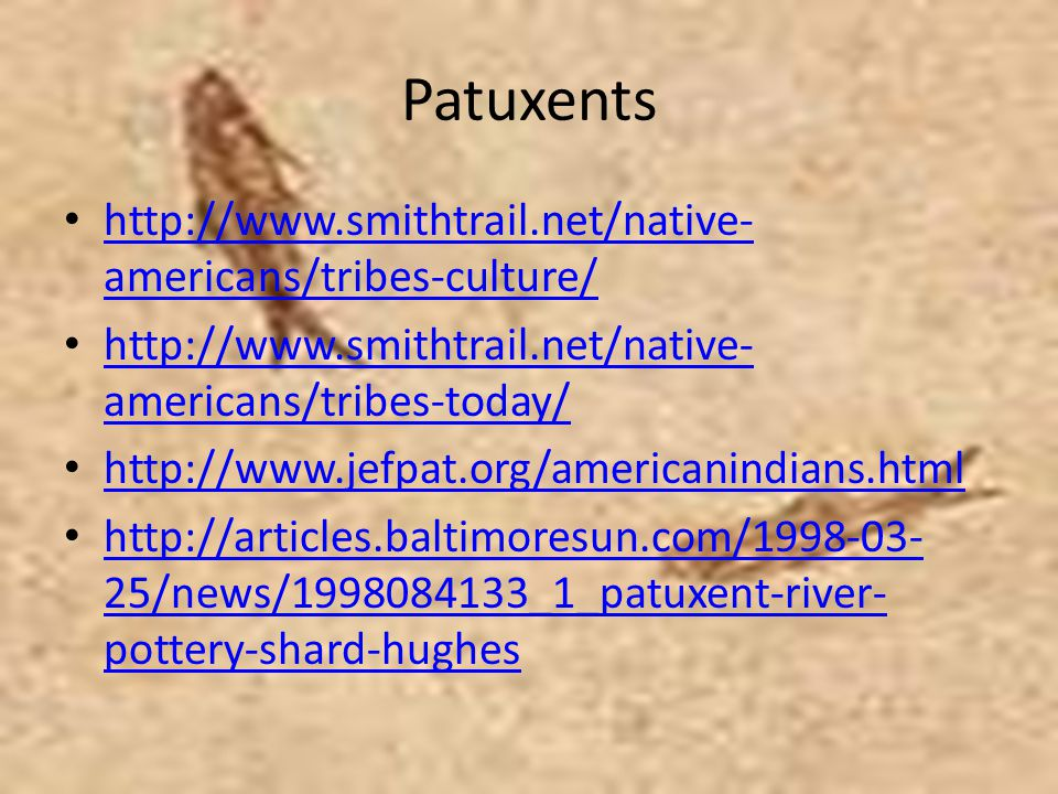 Patuxents http://www.smithtrail.net/native-americans/tribes-culture/