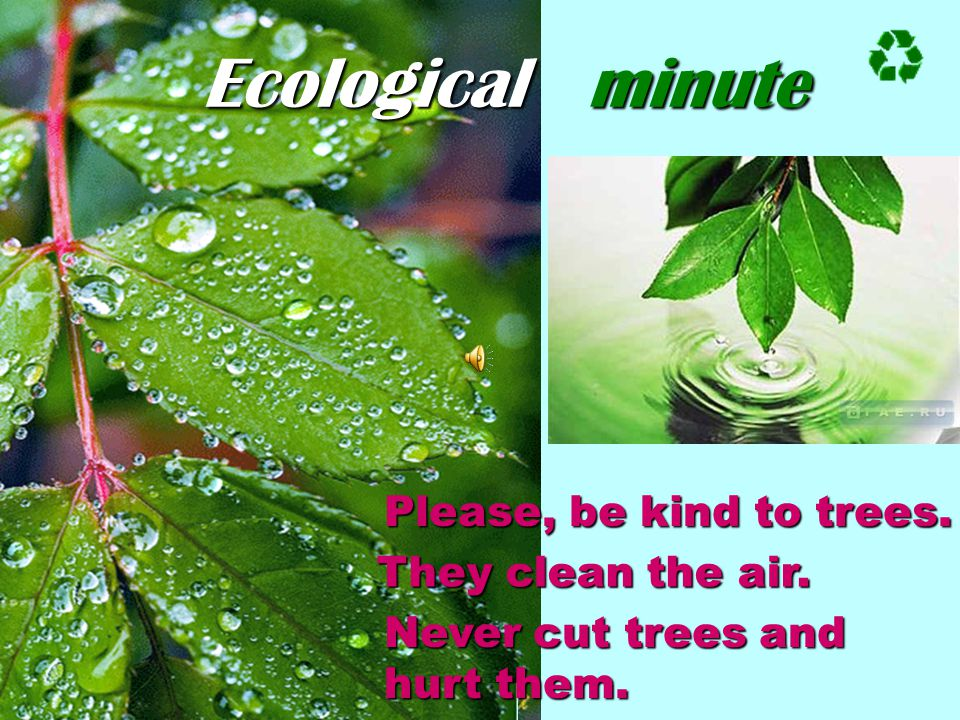 Ecological minute Please, be kind to trees. They clean the air.
