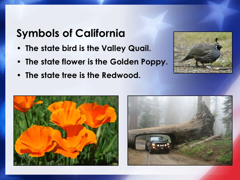 Our 50 States California Ppt Download