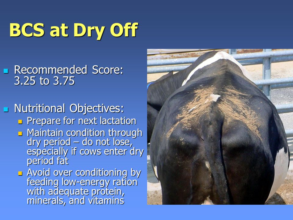 BCS at Dry Off Recommended Score: 3.25 to 3.75 Nutritional Objectives: