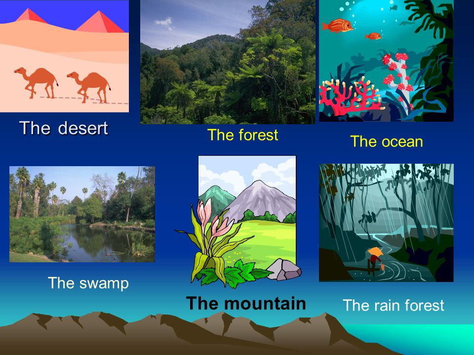 The desert The forest The ocean The swamp The mountain The rain forest