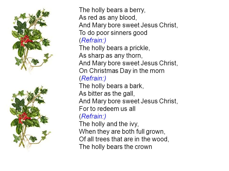 The holly bears a berry, As red as any blood, And Mary bore sweet Jesus Christ, To do poor sinners good (Refrain:)