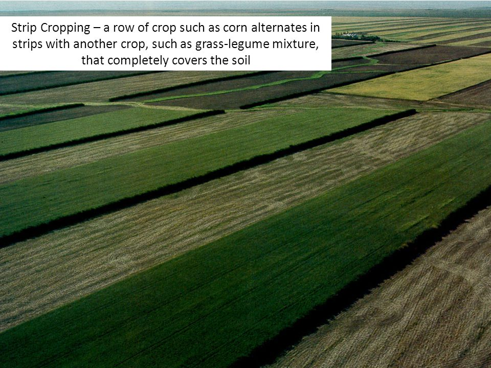 Strip Cropping – a row of crop such as corn alternates in strips with another crop, such as grass-legume mixture, that completely covers the soil
