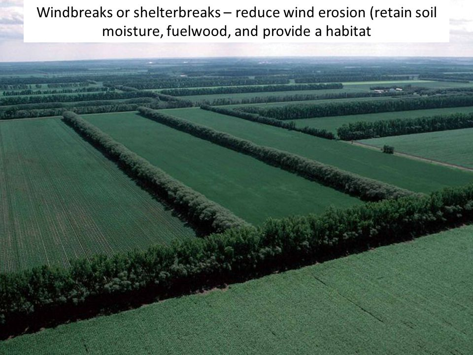 Windbreaks or shelterbreaks – reduce wind erosion (retain soil moisture, fuelwood, and provide a habitat