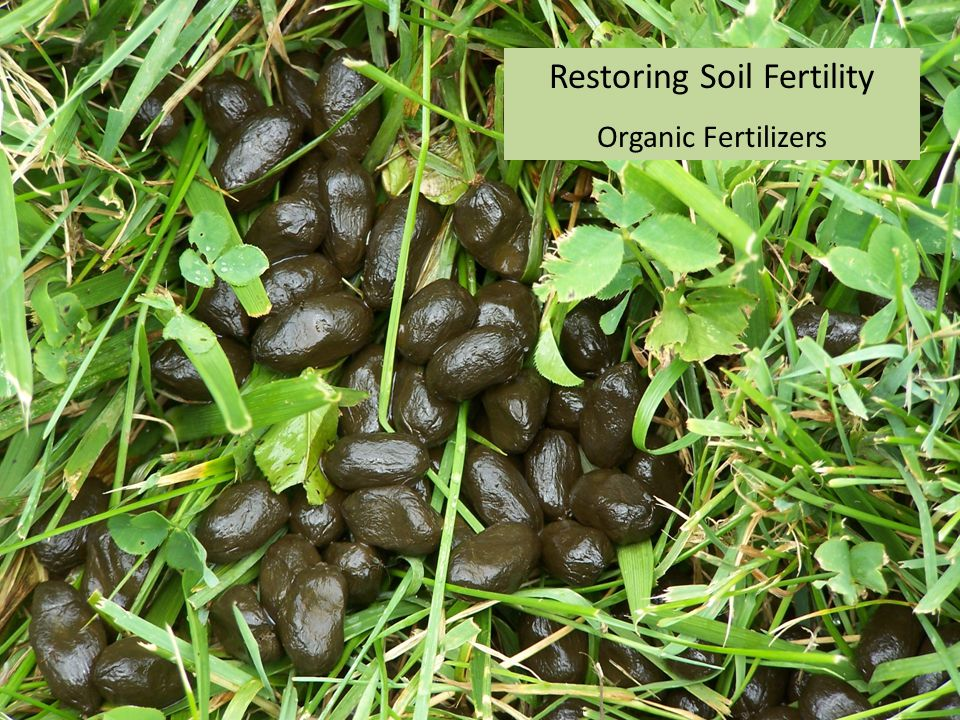 Restoring Soil Fertility