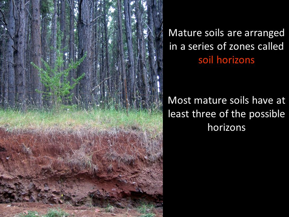 Mature soils are arranged in a series of zones called soil horizons