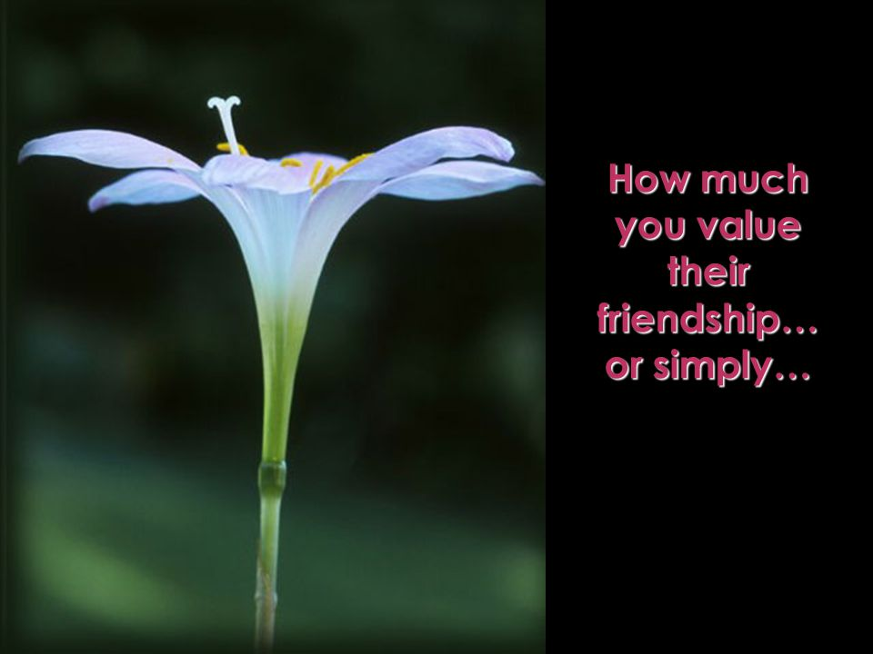 How much you value their friendship… or simply…