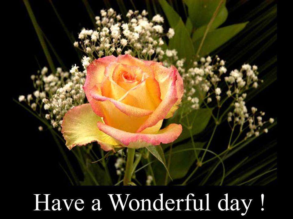 Have a Wonderful day !
