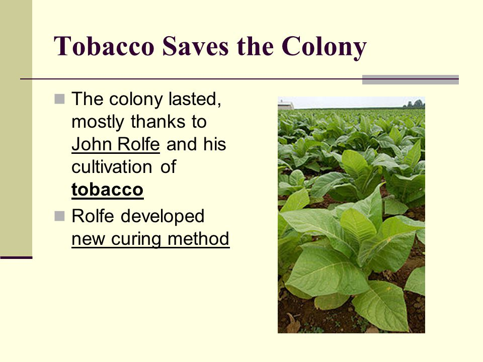 Tobacco Saves the Colony
