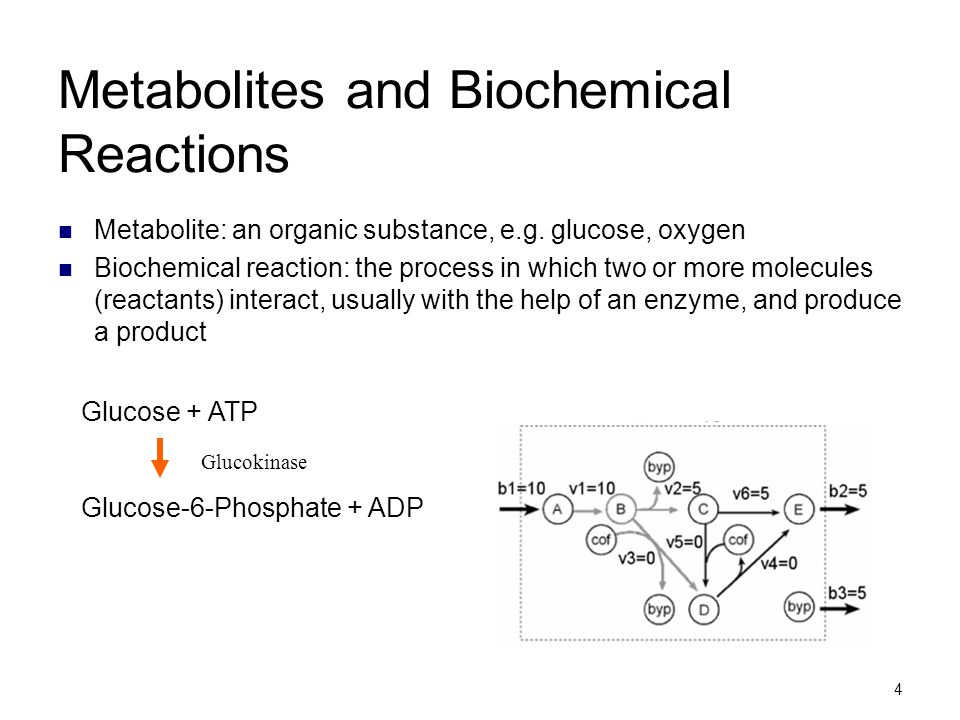 Metabolites and Biochemical Reactions