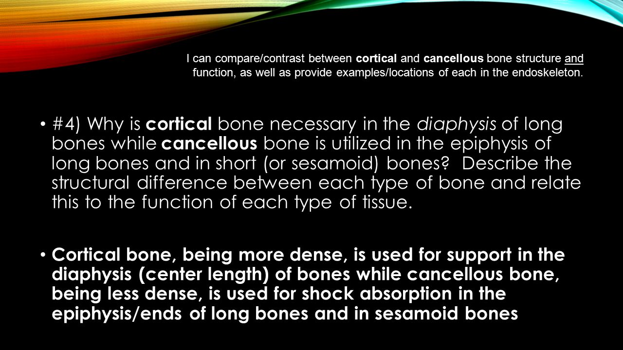 I can compare/contrast between cortical and cancellous bone structure and function, as well as provide examples/locations of each in the endoskeleton.