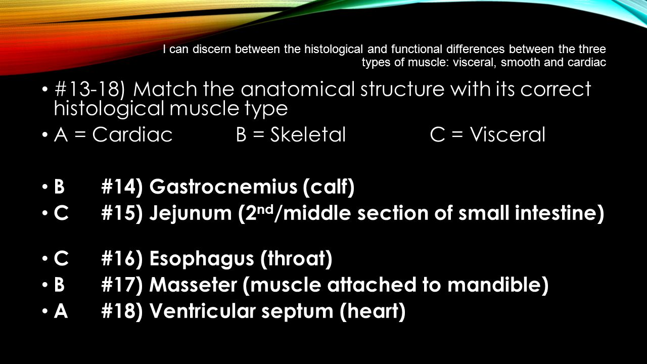 A = Cardiac B = Skeletal C = Visceral B #14) Gastrocnemius (calf)