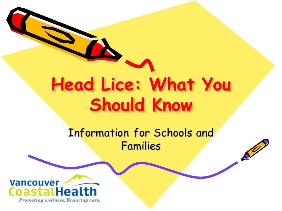 Head Lice: What You Should Know