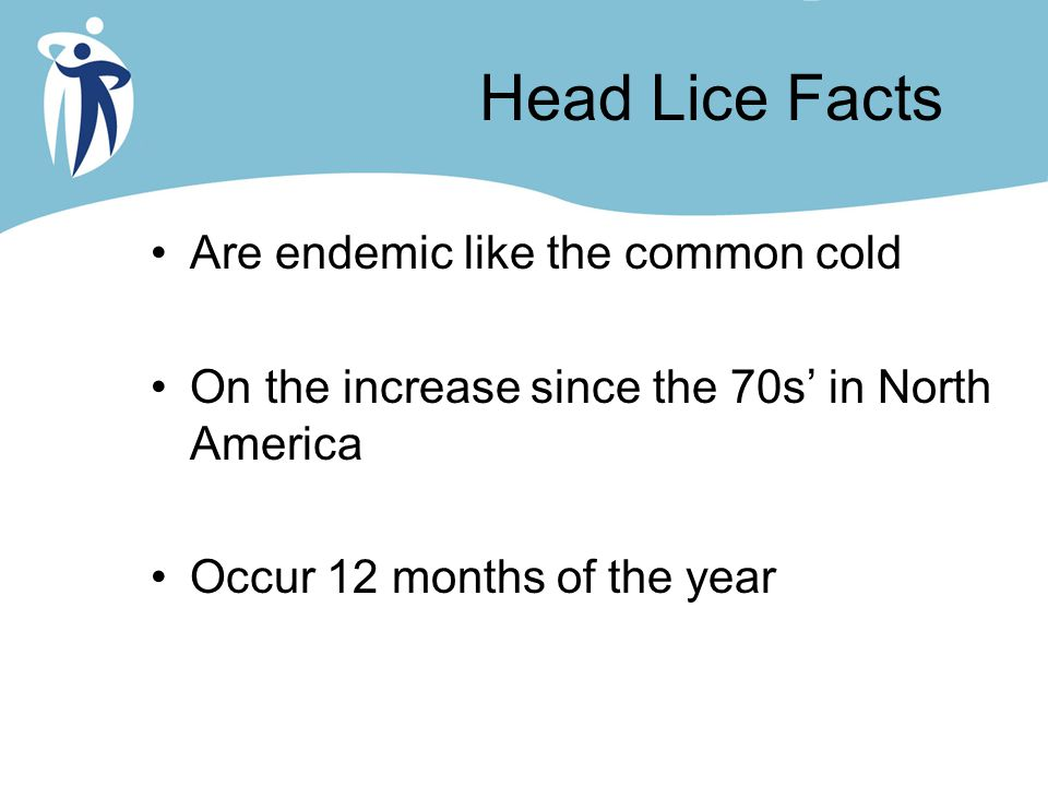 Head Lice Facts Are endemic like the common cold