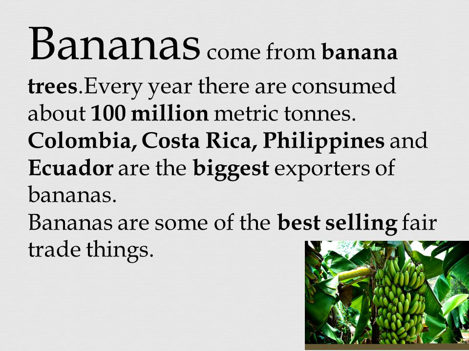 Bananas come from banana trees