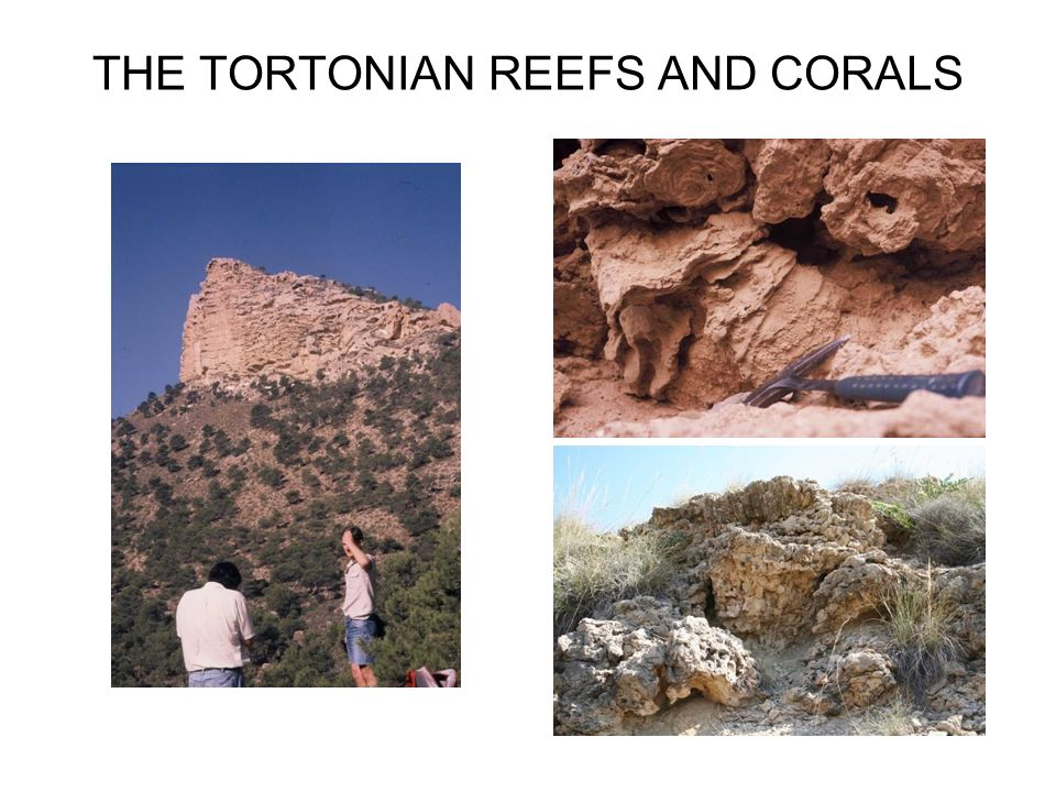 THE TORTONIAN REEFS AND CORALS