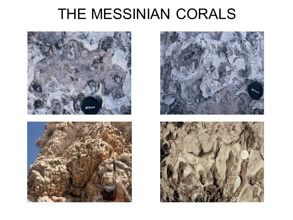 THE MESSINIAN CORALS