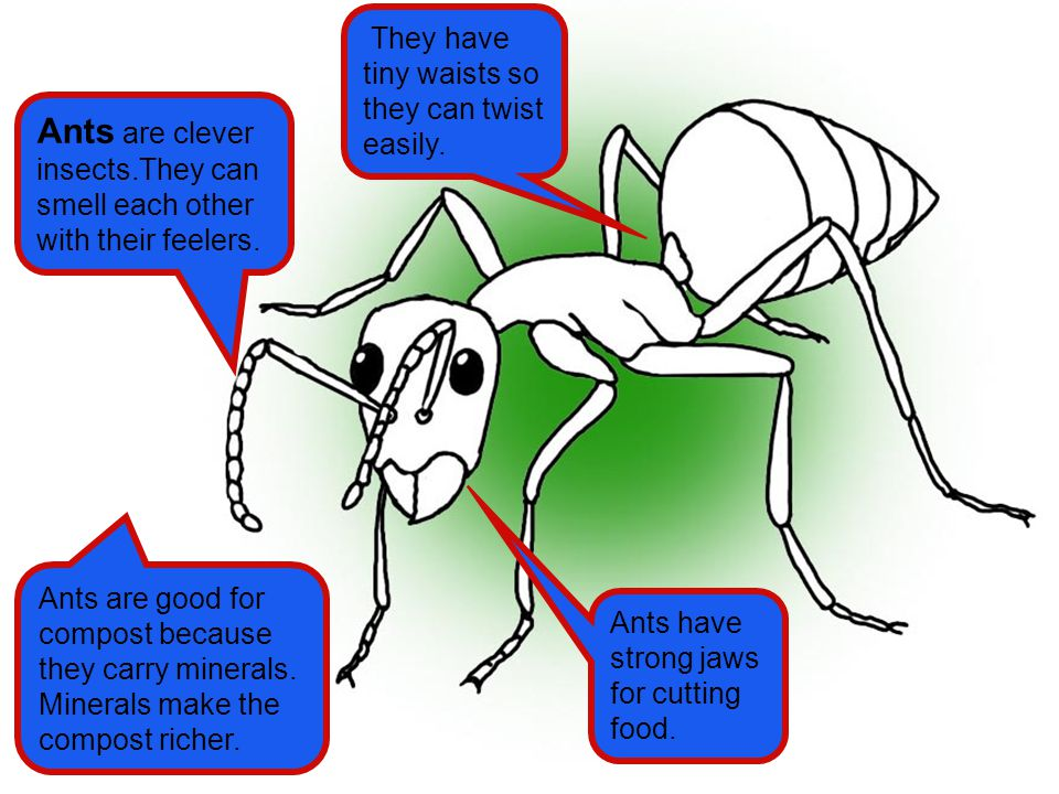 Ants are clever insects.They can smell each other with their feelers.