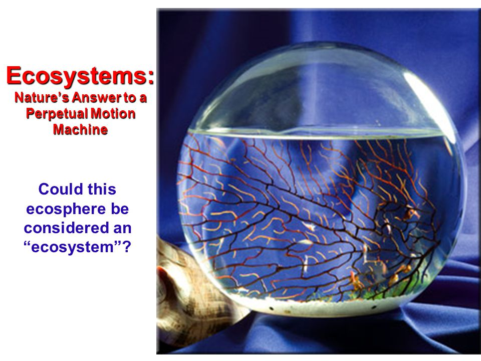 Ecosystems: Nature's Answer to a Perpetual Motion Machine