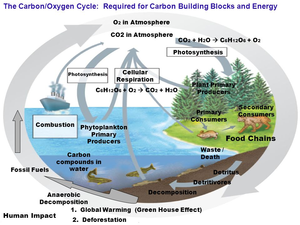 The Carbon/Oxygen Cycle: Required for Carbon Building Blocks and Energy