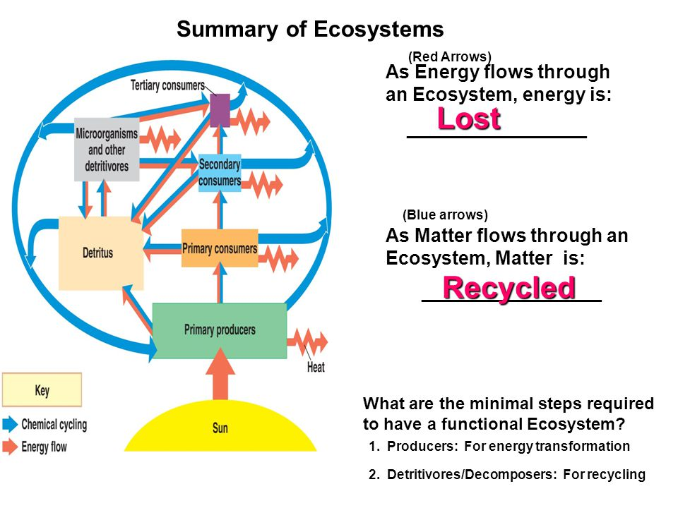 Lost Recycled Summary of Ecosystems
